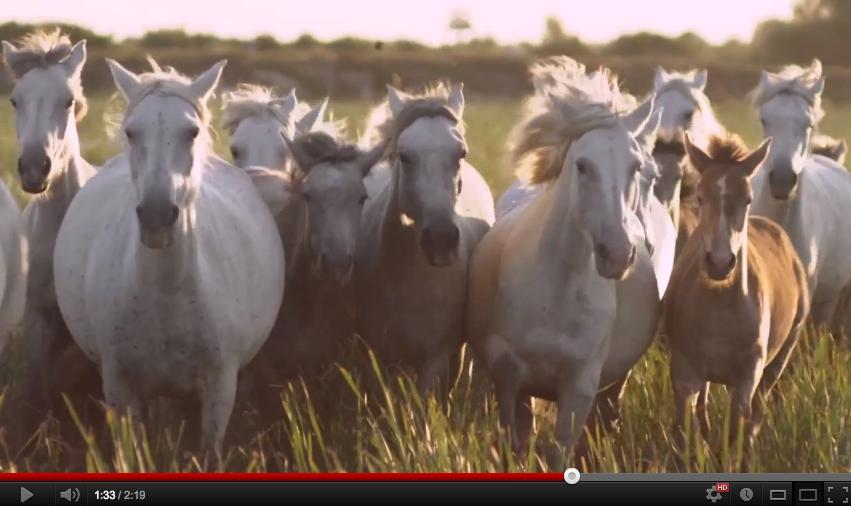 ファッションフィルム vol.84: クロエが60周年を記念し、アルファベットの26文字にまつわるストーリー映像を公開「 H / Horses a Film by Kathryn Ferguson」Chloé Attitudes