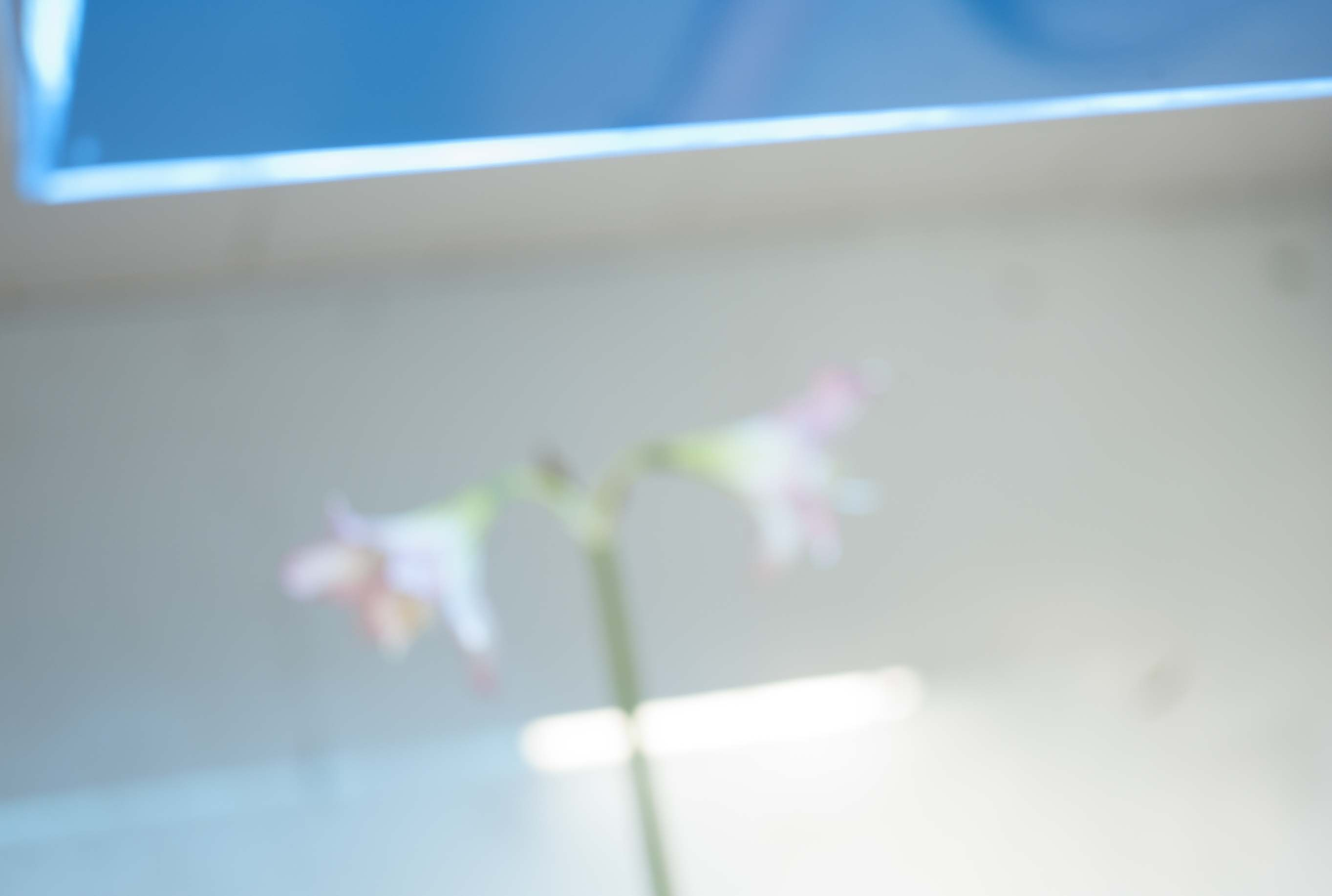 「wall flower」Photo by Kyoji Takahashi