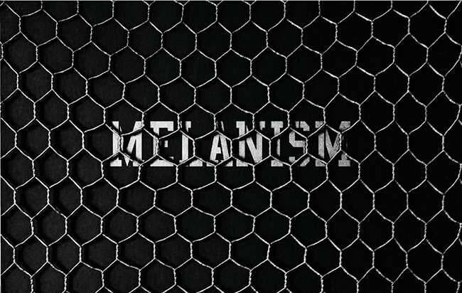 the POOL aoyama MELANISM