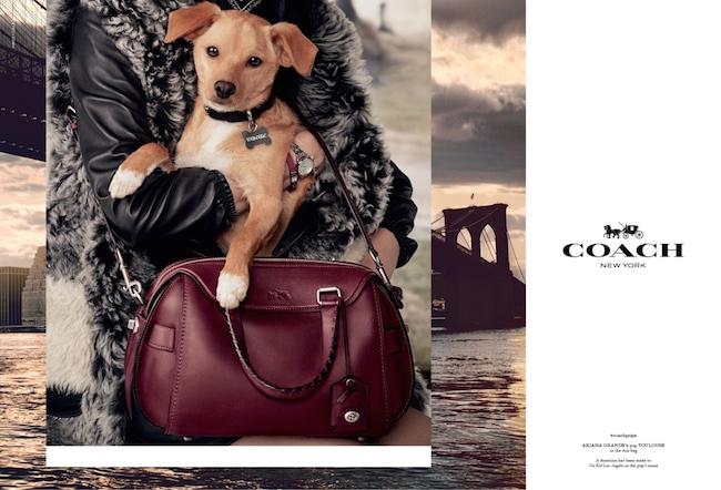 Ariana Grande の愛犬、Toulouseを起用したビジュアル | © Coach