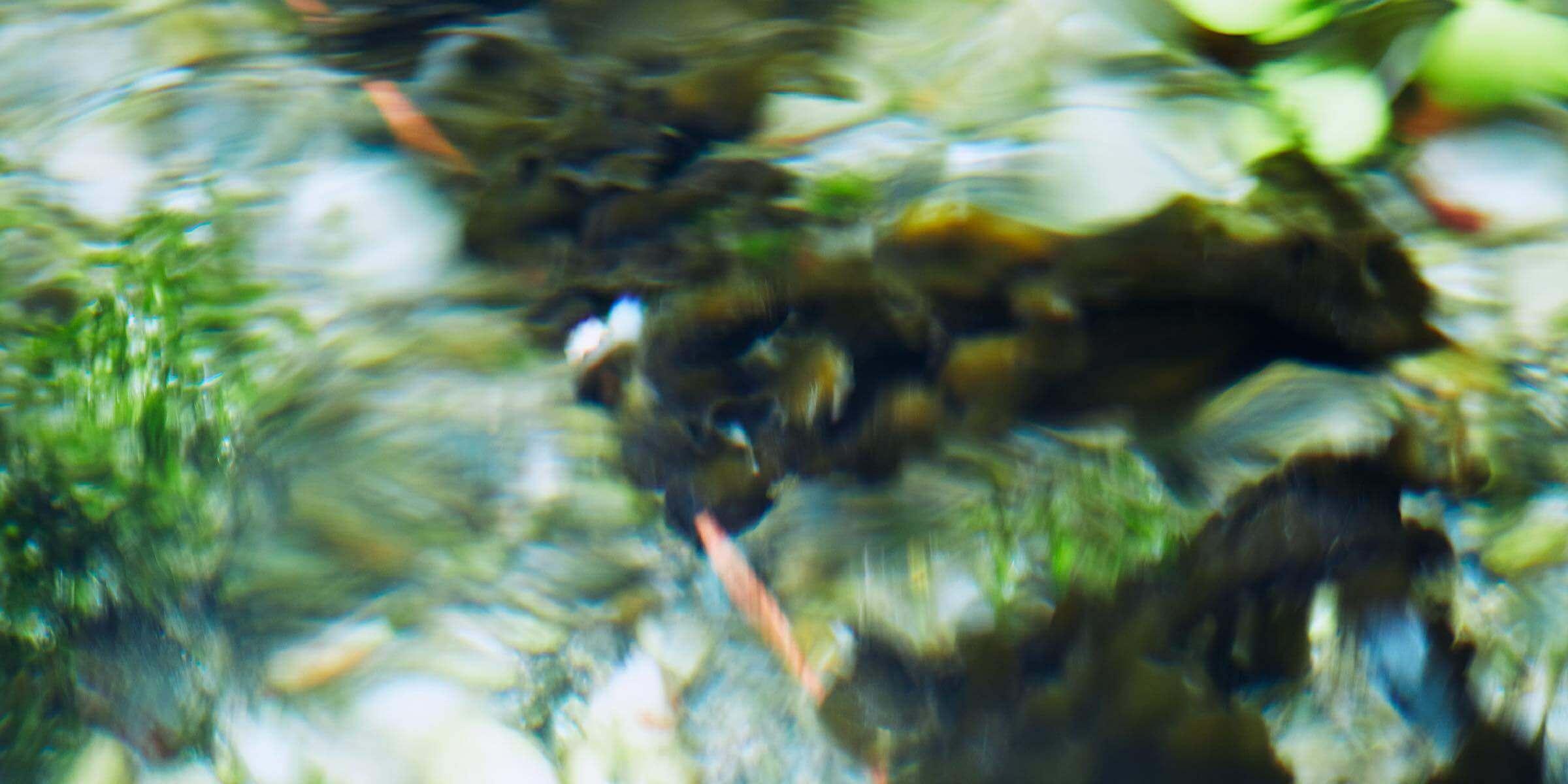 天然記念物スイゼンジノリの生育する福岡県朝倉市の黄金川